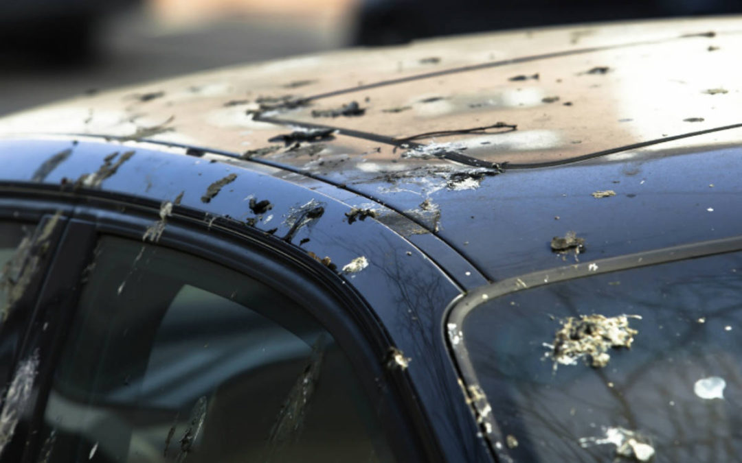 Soluciones a los excrementos de pájaro en el coche